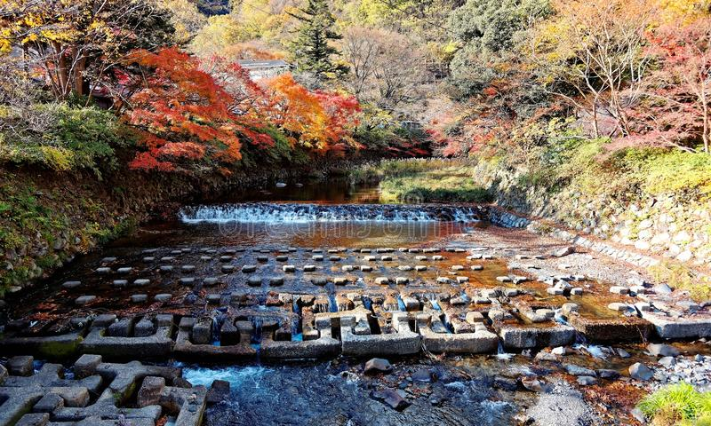 Härligt landskap av en applådera ström- och höstlövverk i landsbygden av Kyoto, Japan arkivfoton