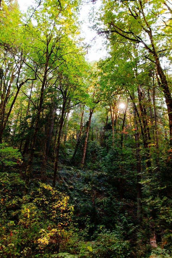 Härligt landskap av en skog arkivfoton