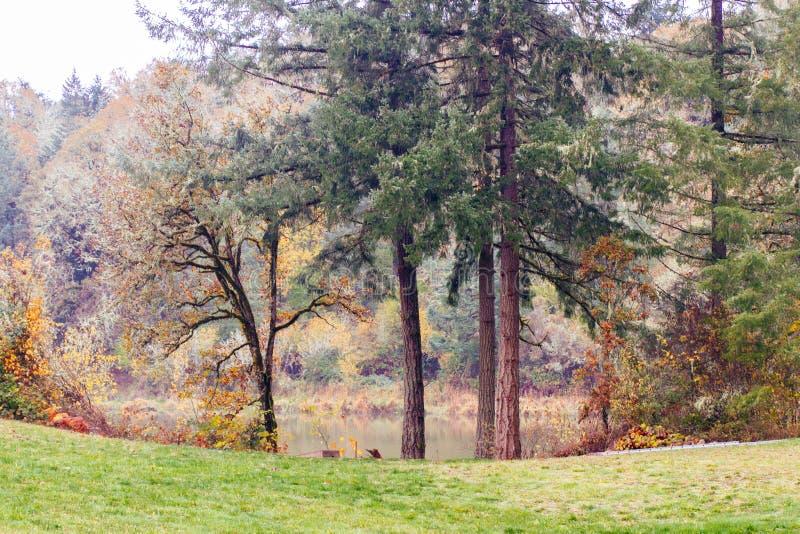 Härligt landskap av en skog royaltyfri fotografi