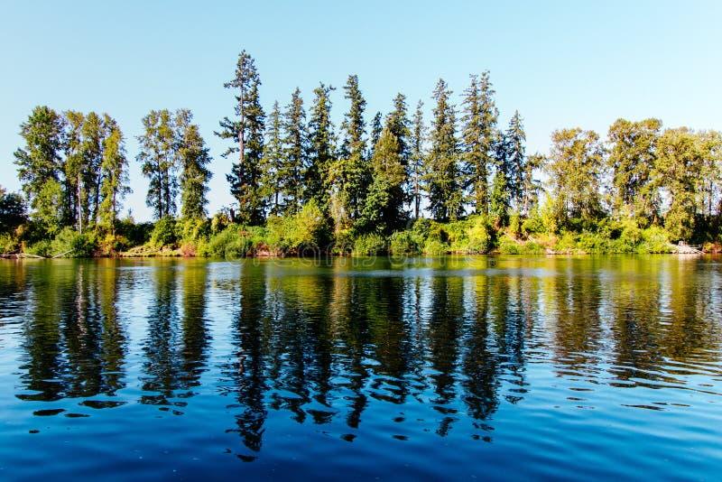 Härligt landskap av en skog arkivbilder