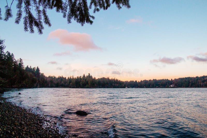 Härligt landskap av en skog fotografering för bildbyråer