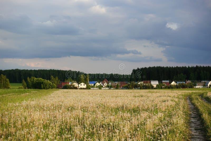 Härligt landskap av ett fält av maskrosor och en by nära skogen Ryssland royaltyfria bilder