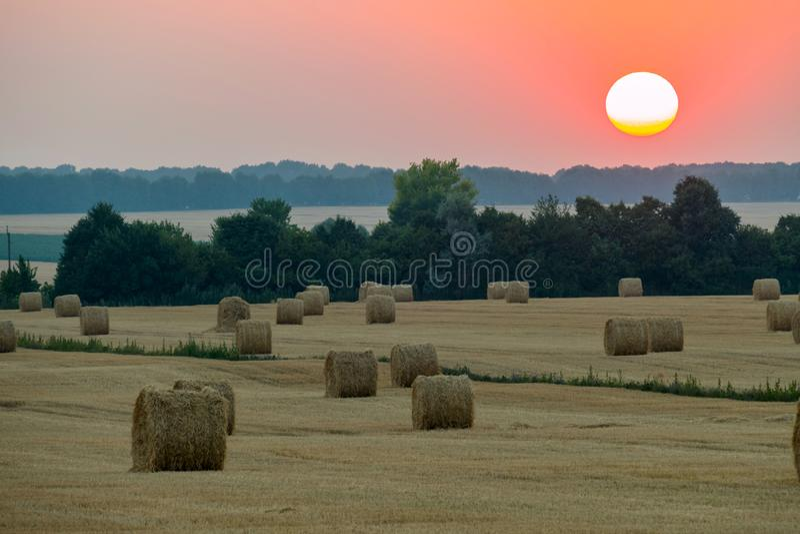 Härligt landskap av fältet med skördat hö i sommaraftonen med en röd diskett av solrullningen för ett träd fotografering för bildbyråer