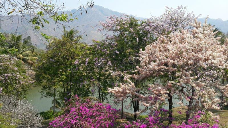 Härligt landskap av färgglade blomstra blommaträd med bakgrund av floden och berg fotografering för bildbyråer