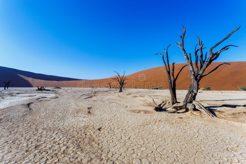 Härligt landskap av gömda Vlei i den Namib öknen arkivfoton