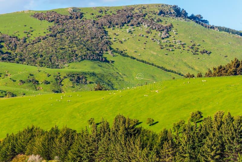 Härligt landskap av Nyaet Zeeland fotografering för bildbyråer