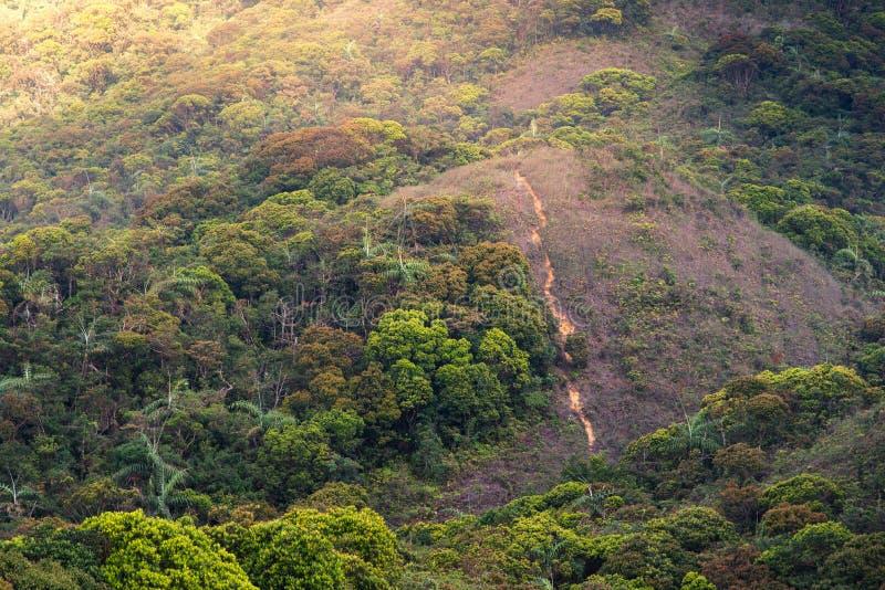 Härligt landskap av regnskogen med varmt ljus fotografering för bildbyråer
