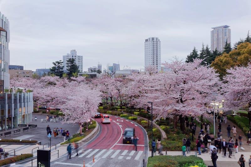 Härligt landskap av Sakura Matsuri Festival i Roppongi royaltyfria foton