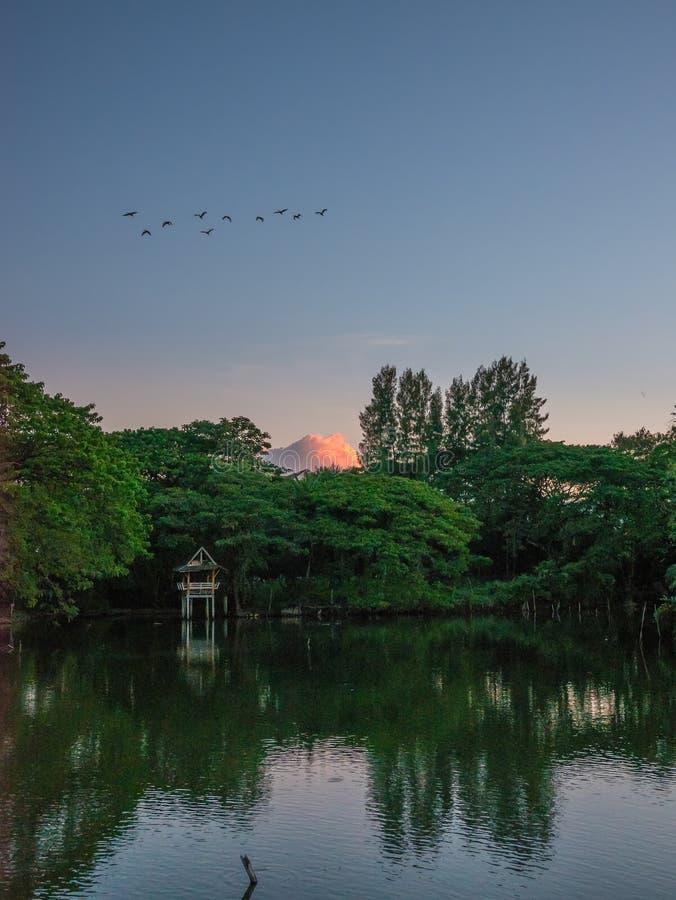 Härligt landskap av sjön och fåglar i buriram, Thailand royaltyfri bild