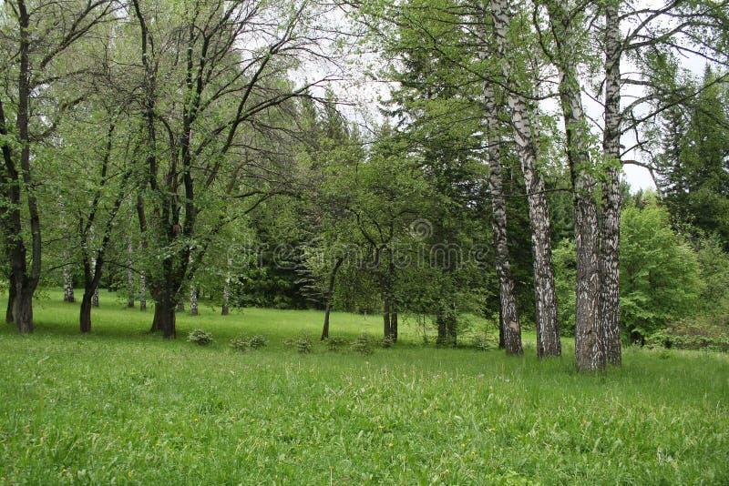 Härligt landskap av skogar och fält royaltyfri bild
