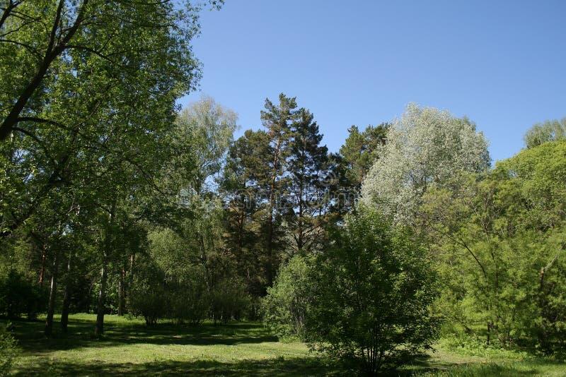 Härligt landskap av skogar och fält royaltyfria bilder