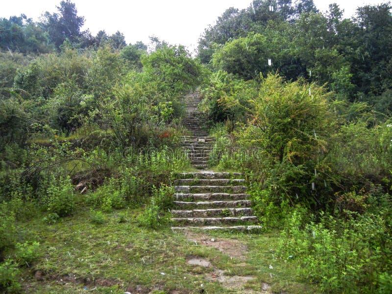 H?rligt landskap av skogen med stenig slingatrottoar arkivfoto