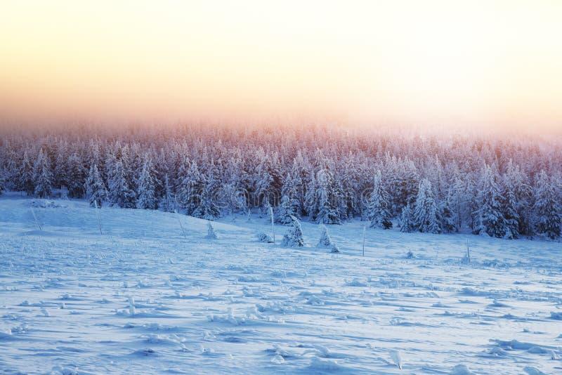 Härligt landskap av solnedgången i vinterskog arkivfoto