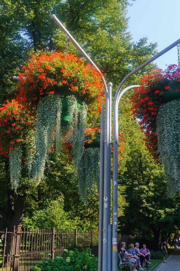 Härligt landskap av sommarträdgården Dekorativ sammansättning av färgrika blommor i Riga latvia arkivbild