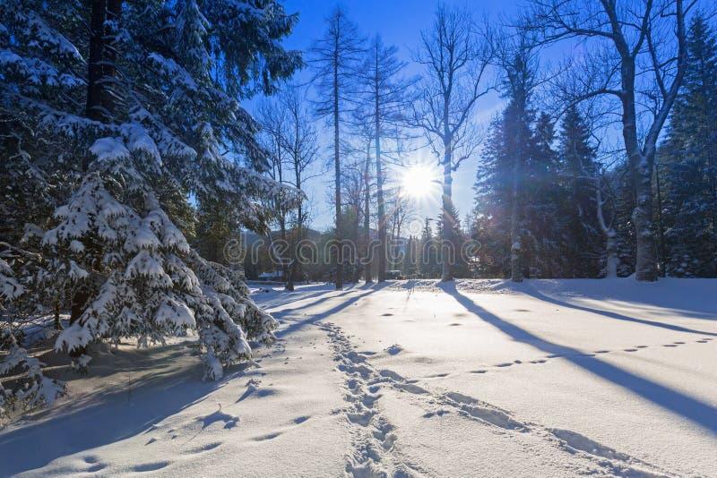 Härligt landskap av Tatra berg på den snöig vintern royaltyfria foton