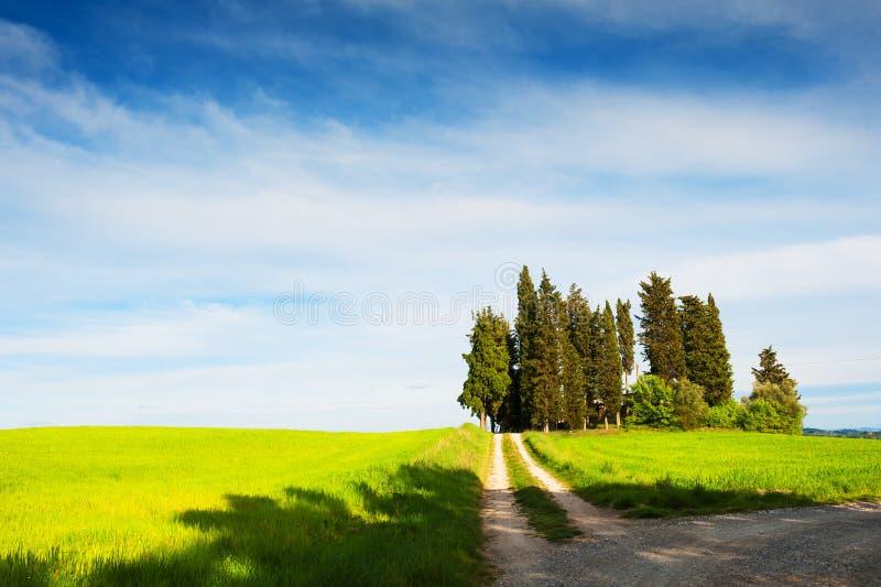 Härligt landskap av Tuscany, Italien royaltyfri fotografi