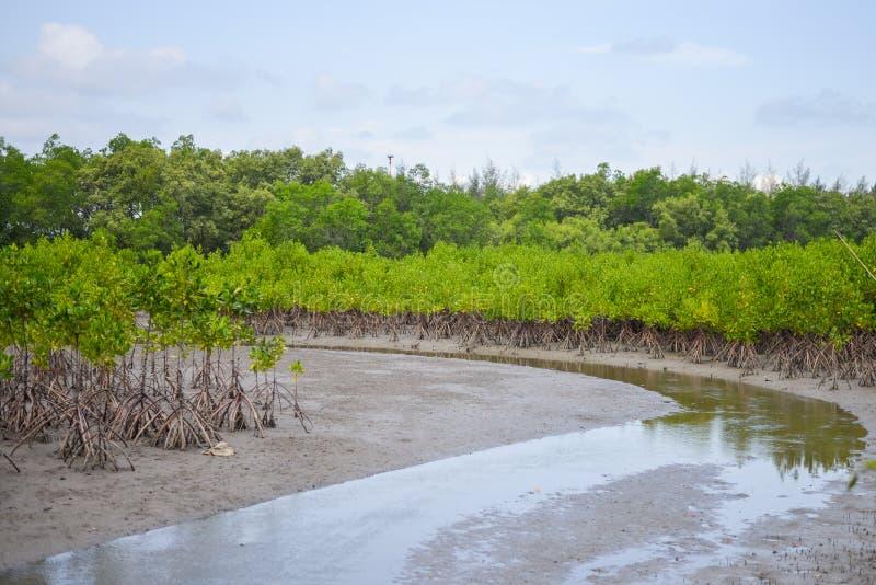 Härligt landskap av våtmark arkivfoton