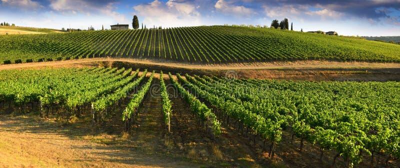 Härligt landskap av vingårdar i Tuscany Chiantiregion i sommarsäsong royaltyfri bild