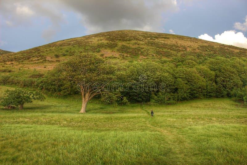 Härligt landskap, Devon, England royaltyfri fotografi
