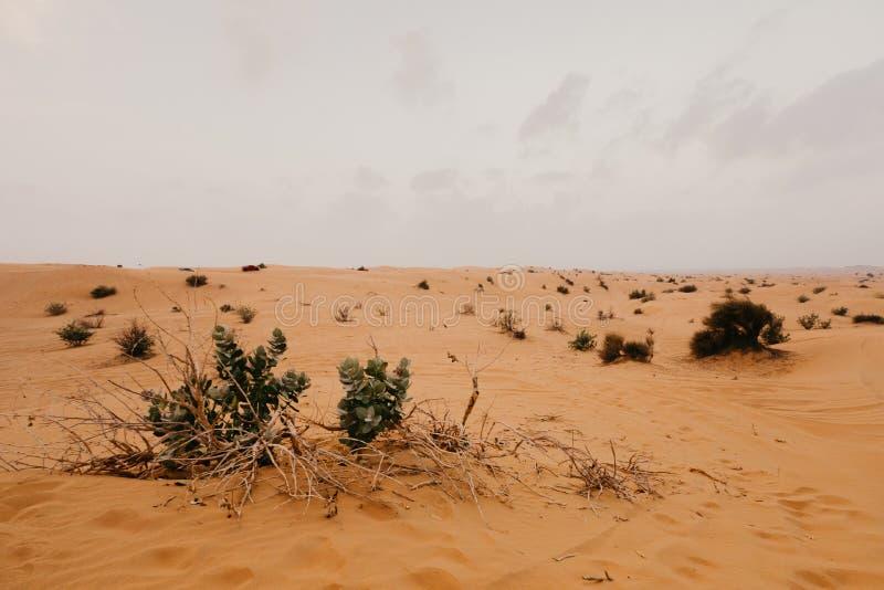 Härligt landskap för arabisk öken royaltyfri bild