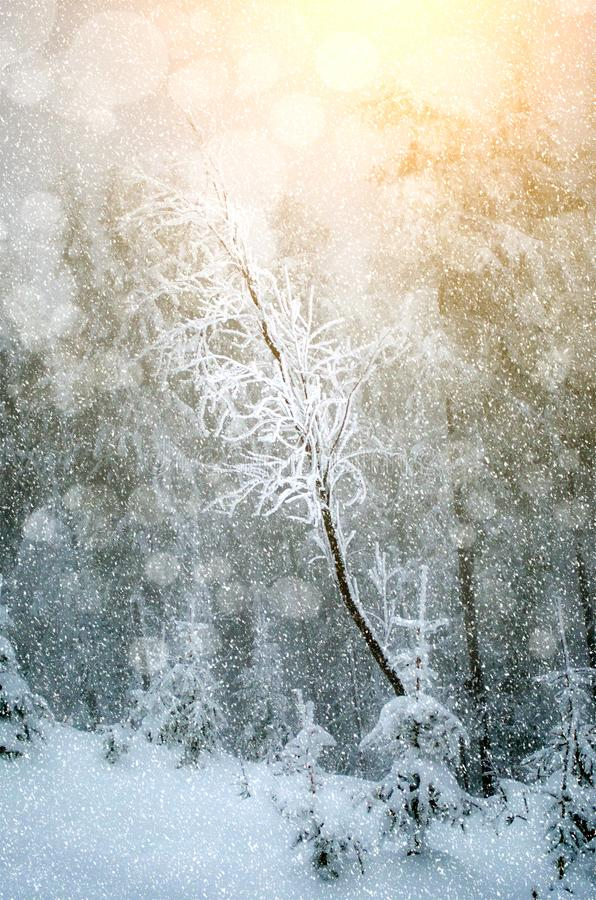Härligt landskap för nytt år under snöfall arkivbilder