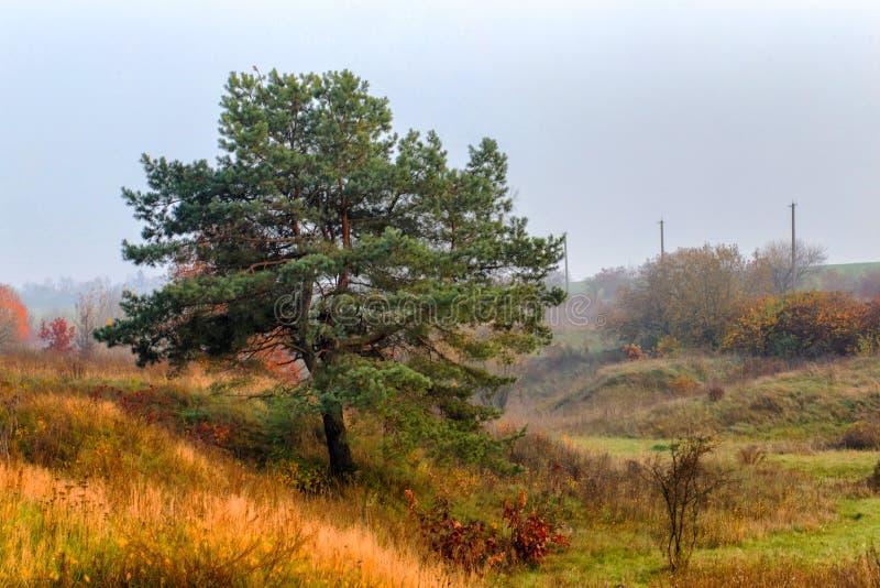 Härligt landskap, höst i fältet, arkivfoto