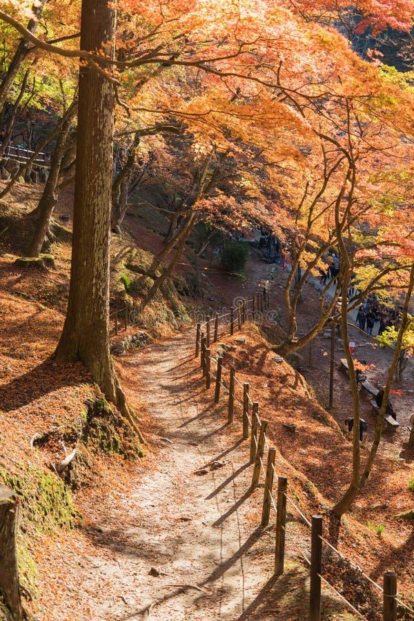 Härligt landskap i höst på Korankei, Japan royaltyfri bild