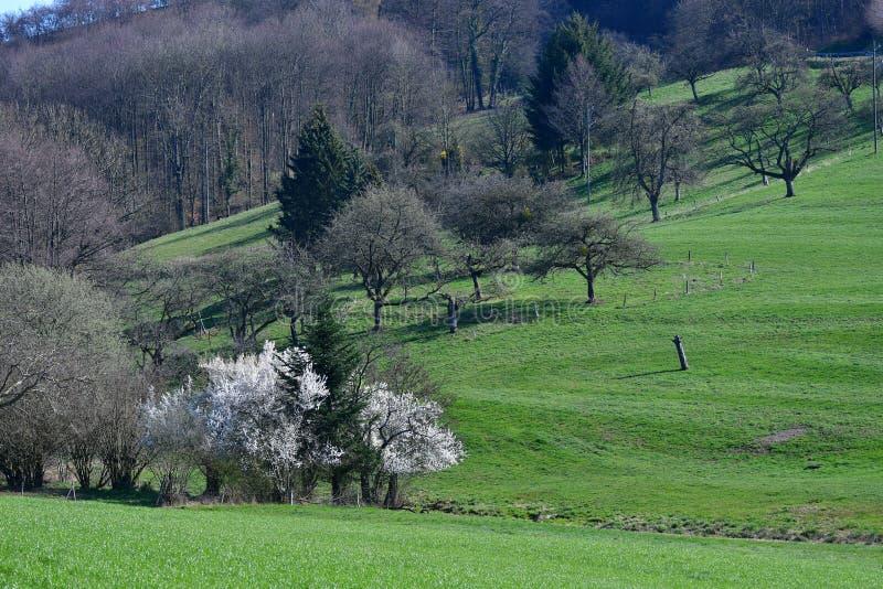 Härligt landskap i tidig vår i Odenwalden, Tyskland royaltyfri bild