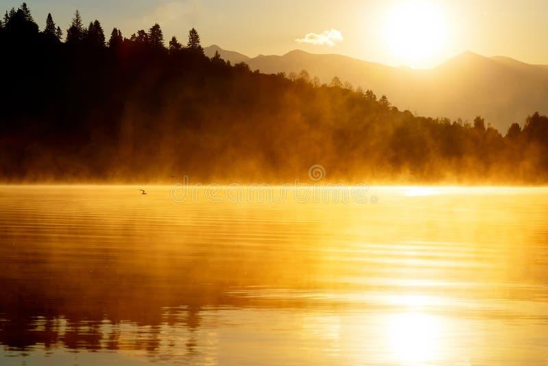 Härligt landskap med berg och sjön på gryning i guld- och apelsinsignaler flyga över seagullvatten fotografering för bildbyråer