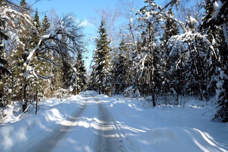 Härligt landskap med den förorts- vägen i snö-täckte höga träd i vinterskogen efter snöfall på solig dag arkivbilder