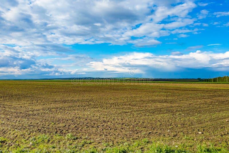 Härligt landskap med det gröna fältet och stora vita moln arkivfoto