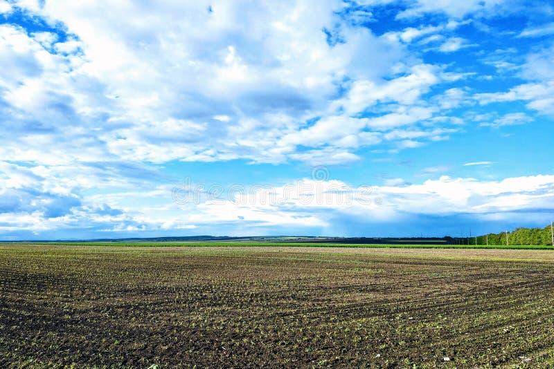 Härligt landskap med det gröna fältet och stora vita moln arkivbilder