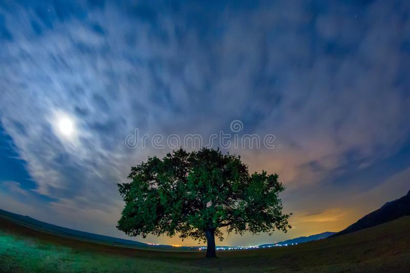Härligt landskap med en ensam ek, dramatiska moln och en himmel för stjärnklar natt med måneljus arkivbilder