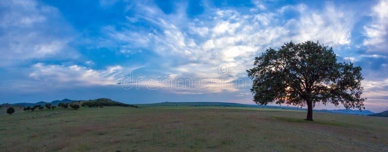 Härligt landskap med en ensam ek i solnedgången och de dramatiska molnen arkivbilder