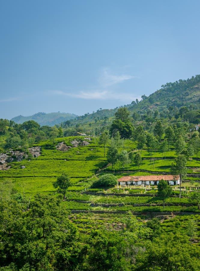 Härligt landskap med enkla hem i mitt av naturen royaltyfri fotografi