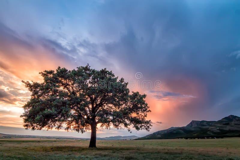 Härligt landskap med ett ensamt träd i ett fält, inställningssolen som skiner till och med filialer, och stormmoln arkivfoton
