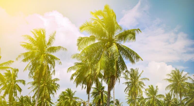 Härligt landskap med kokosnötpalmträd fotografering för bildbyråer