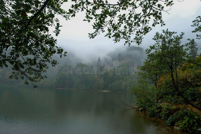 Härligt landskap med sjön och den dimmiga skogen arkivfoton