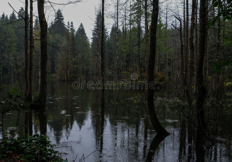 Härligt landskap med sjön och den dimmiga skogen arkivfoto