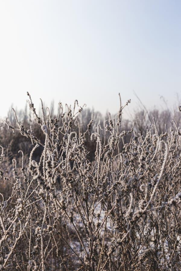 Härligt landskap med torrt gräs som täckas med rimfrost fotografering för bildbyråer