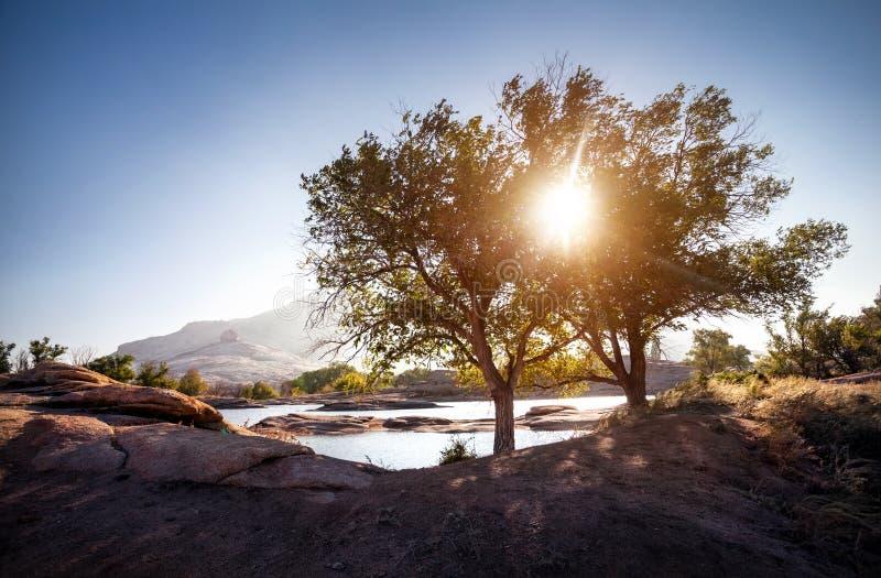 Härligt landskap med trädet på soluppgång royaltyfri bild