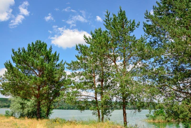 Härligt landskap vid vattnet Träd för gräsplan för flod för moln för blå himmel för vårsommarlandskap arkivfoto