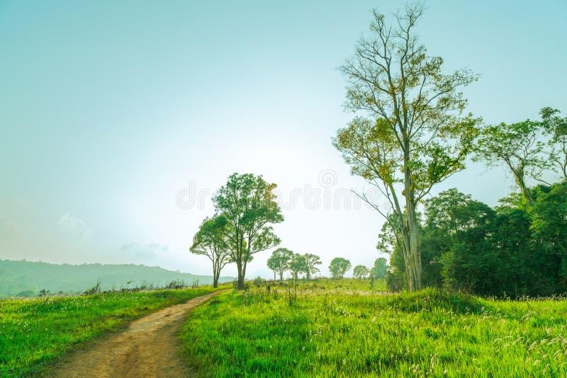 Härligt lantligt landskap av fältet för grönt gräs med vita blommor och den dammiga landsvägen och träd på kullen nära berget och royaltyfri foto