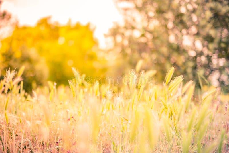 Härligt lantligt landskap för guld- solnedgång med soluppgång över en äng royaltyfria bilder