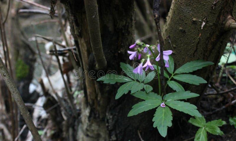 Härligt lila växa för blommor på en trädstam royaltyfri bild