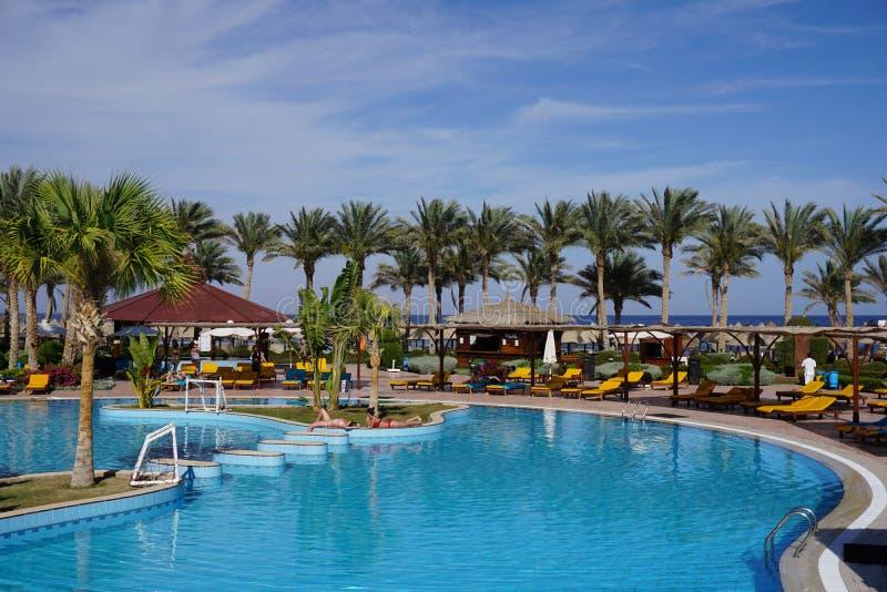 Härligt lyxigt paraply och stol runt om utomhus- simbassäng i hotellet och semesterorten med kokosnötpalmträdet på blå himmel - ö royaltyfria bilder