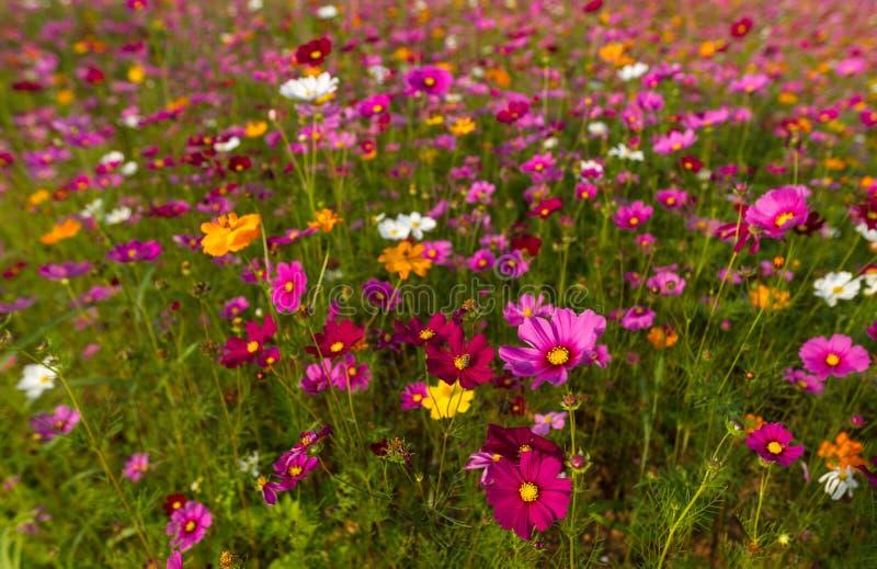 Härligt mångfärgat blommafält, romantisk blommabakgrund och tapet, royaltyfri fotografi