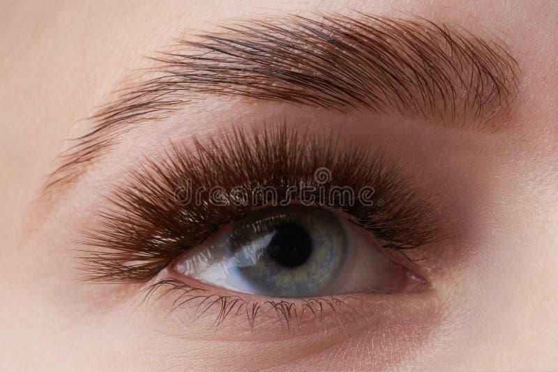 Härligt makrofotografi av en kvinnas öga med extremt smink av långa ögonfrans Perfekta långa ögonfrans utan skönhetsmedel royaltyfri fotografi