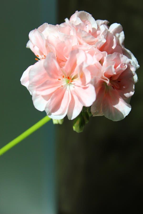 Härligt makroskott av blommor fotografering för bildbyråer