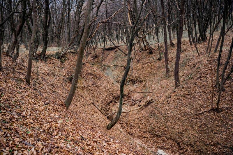 Härligt naturlandskap av skogravin i tidig vår royaltyfria bilder
